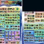 Vertebrates Top Marine Aquarium Species