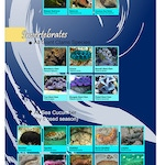 Banned Species List